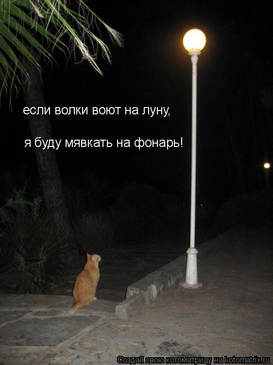 Котоматрица: если волки воют на луну, я буду мявкать на фонарь!