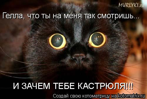 Котоматрица: Гелла, что ты на меня так смотришь... И ЗАЧЕМ ТЕБЕ КАСТРЮЛЯ!!!