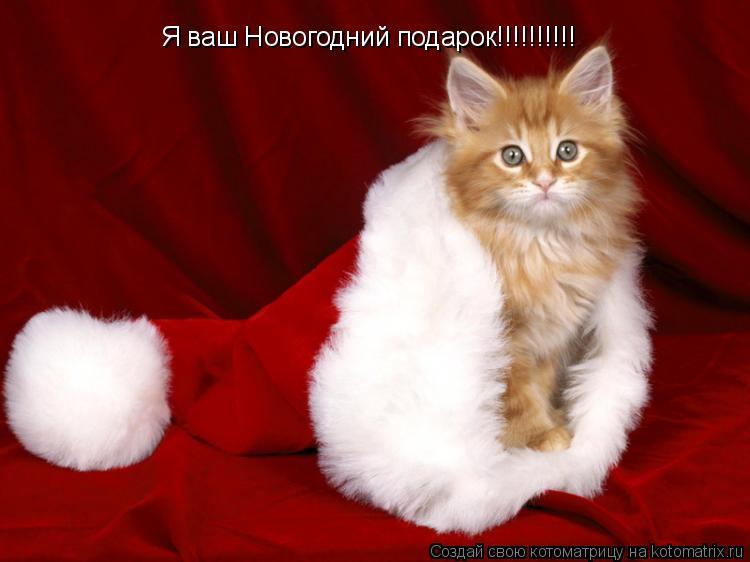 Котоматрица: Я ваш Новогодний подарок!!!!!!!!!!