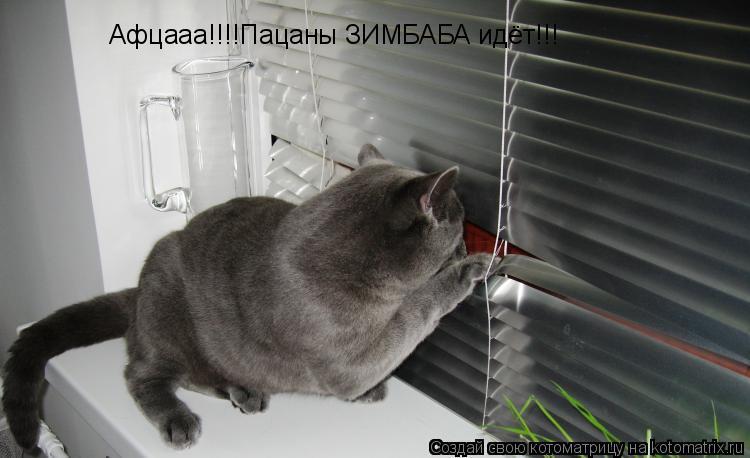 Котоматрица: Афцааа!!!!Пацаны ЗИМБАБА идёт!!!