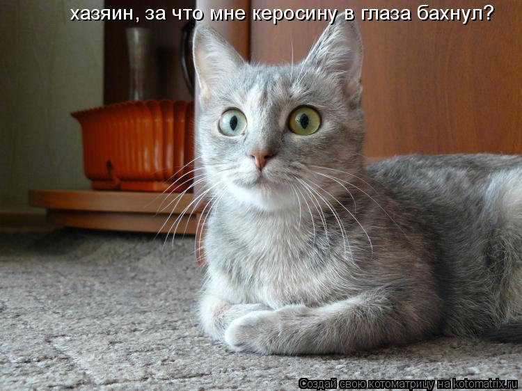 Котоматрица: хазяин, за что мне керосину в глаза бахнул?
