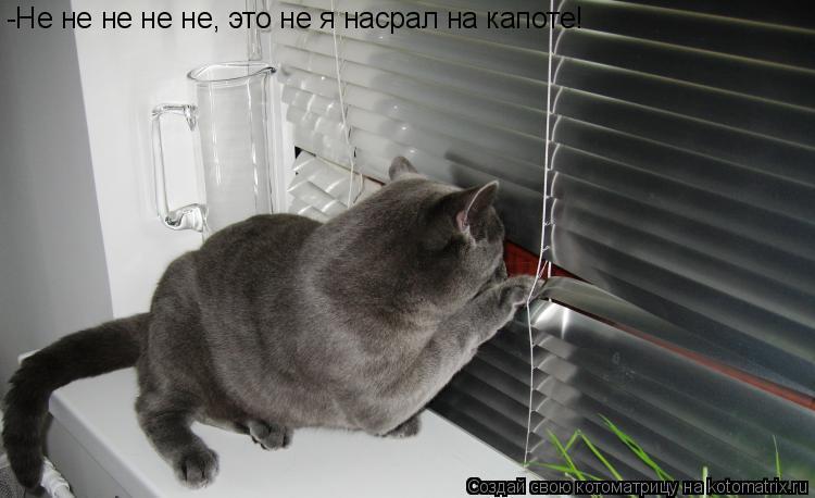 Котоматрица: -Не не не не не, это не я насрал на капоте!