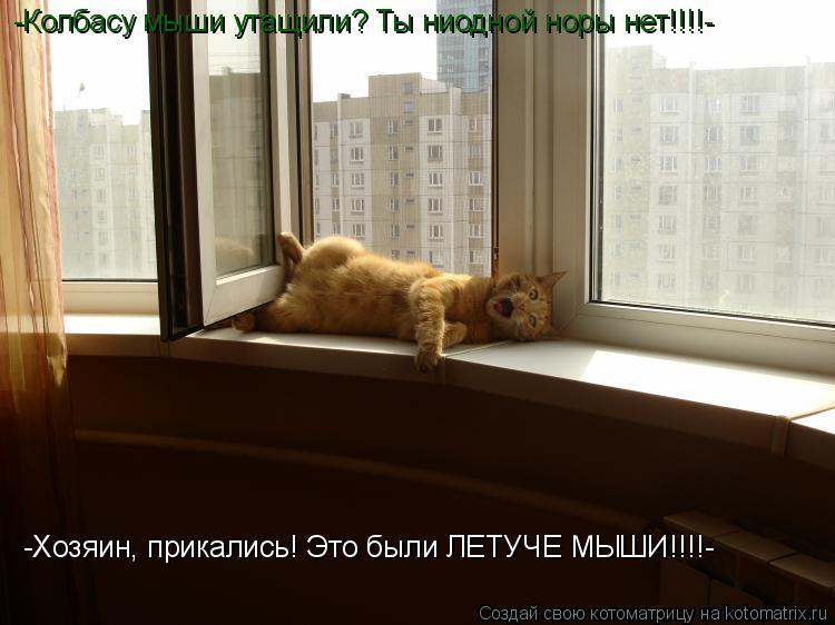 Котоматрица: -Колбасу мыши утащили? Ты ниодной норы нет!!!!- -Хозяин, прикались! Это были ЛЕТУЧЕ МЫШИ!!!!-