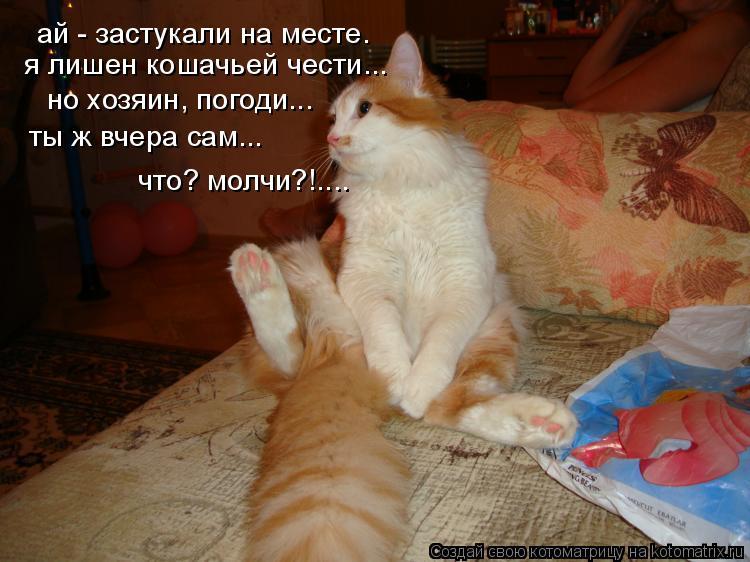 Котоматрица: ай - застукали на месте. я лишен кошачьей чести... но хозяин, погоди... ты ж вчера сам...  что? молчи?!....