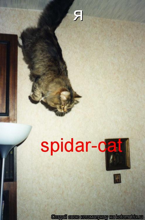 Котоматрица: я spidar-cat