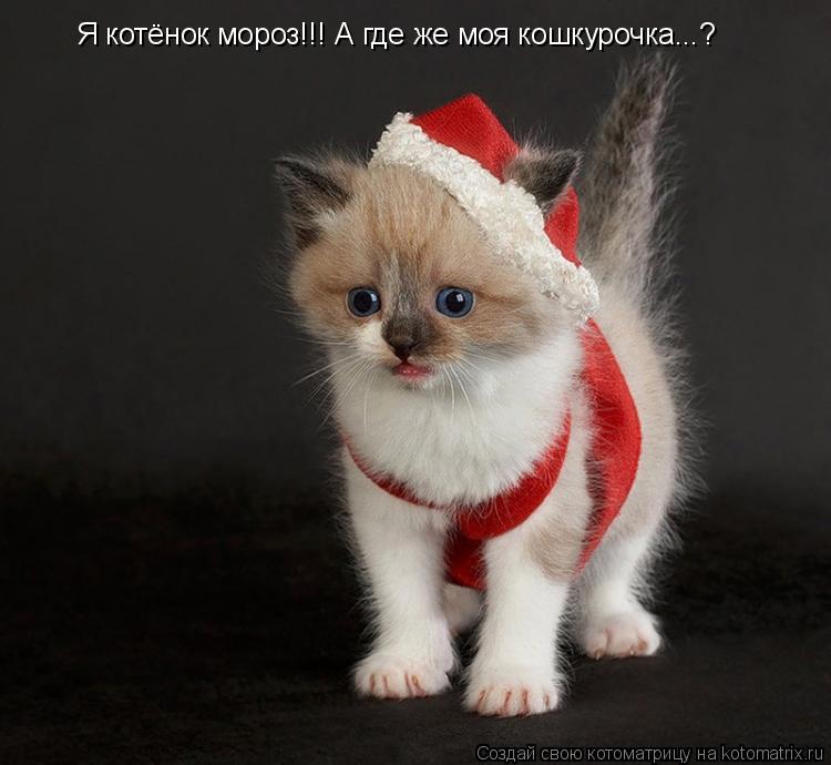 Котоматрица: Я котёнок мороз!!! А где же моя кошкурочка...?