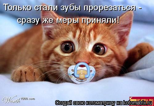 Котоматрица: Только стали зубы прорезаться - сразу же меры приняли!
