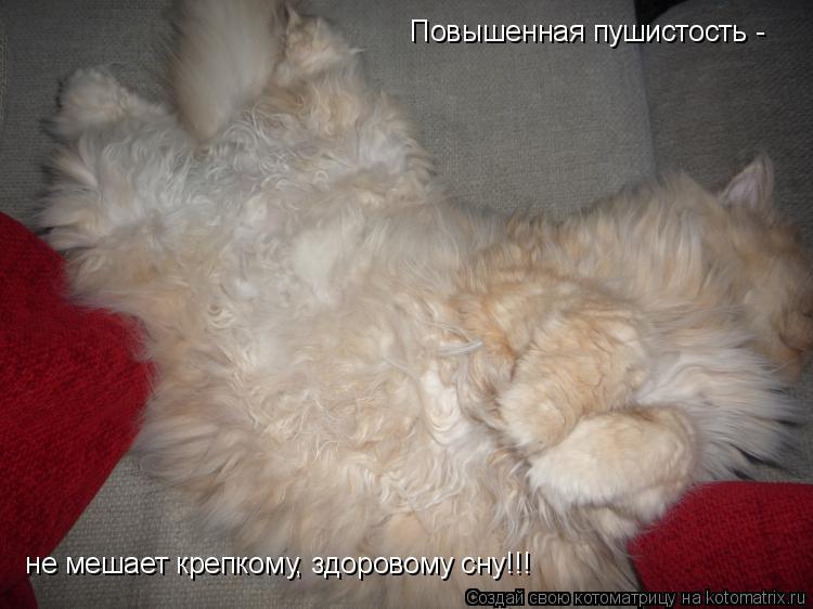 Котоматрица: Повышенная пушистость -  не мешает крепкому, здоровому сну!!!