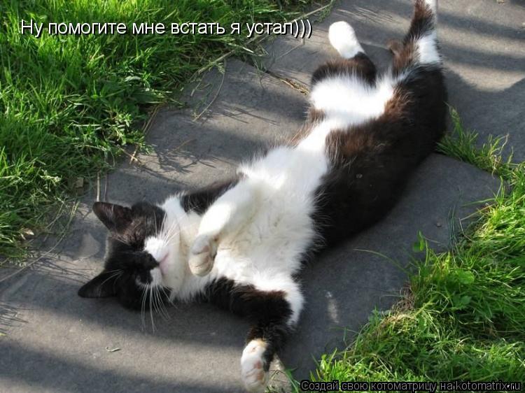 Котоматрица: Ну помогите мне встать я устал)))