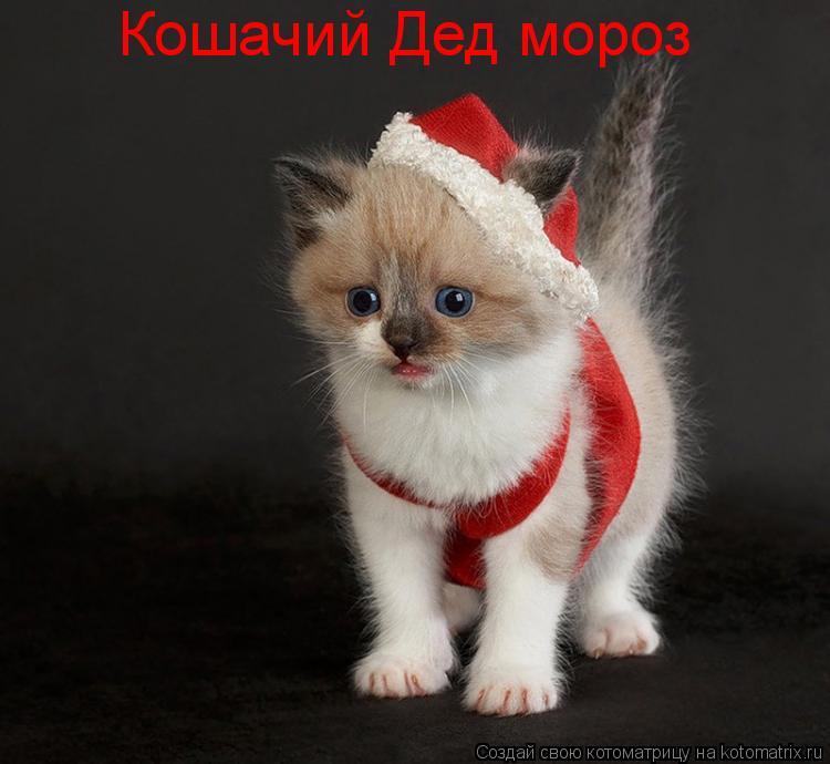 Котоматрица: Кошачий Дед мороз