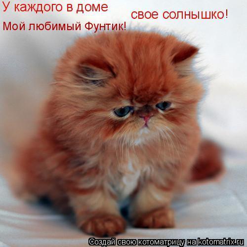 Котоматрица: Мой любимый Фунтик! !
