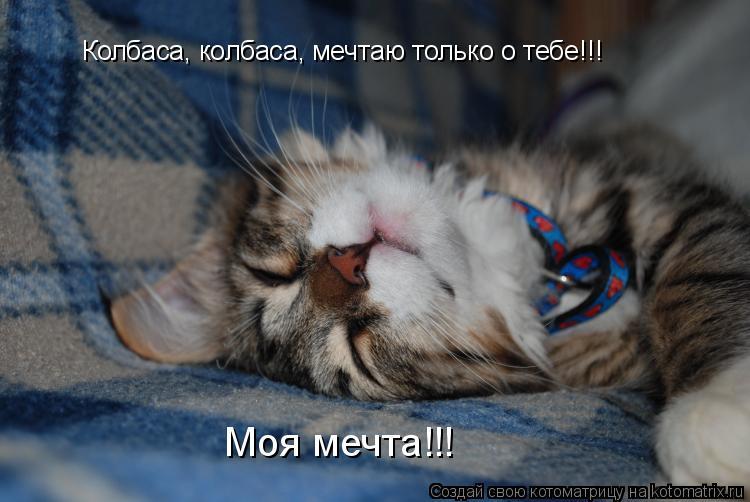 Котоматрица: Колбаса, колбаса, мечтаю только о тебе!!! Моя мечта!!!