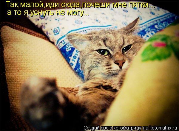 Котоматрица: Так,малой,иди сюда,почеши мне пятки... а то я уснуть не могу...