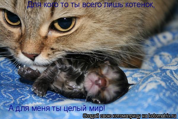 Котоматрица: Для кого то ты всего лишь котенок, А для меня ты целый мир!