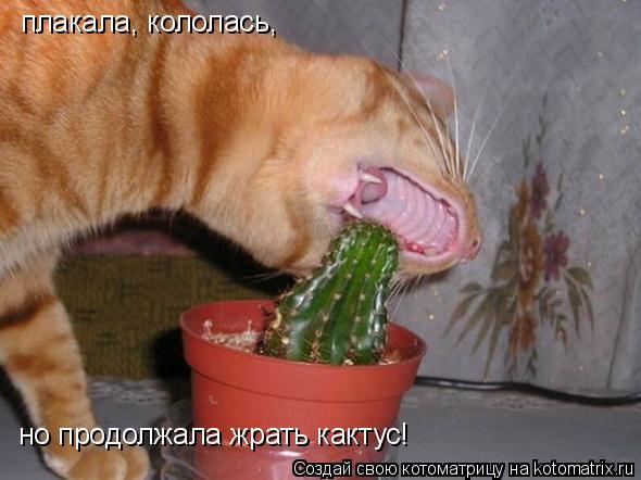 Котоматрица: плакала, кололась, но продолжала жрать кактус!