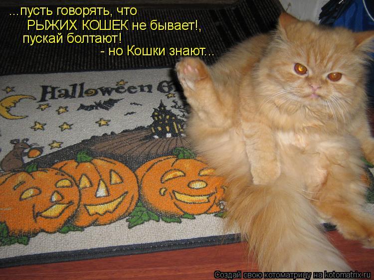 Котоматрица: ...пусть говорять, что  РЫЖИХ КОШЕК не бывает!,  пускай болтают!  - но Кошки знают...