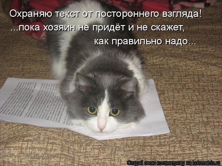 Котоматрица: Охраняю текст от постороннего взгляда! ...пока хозяин не придёт и не скажет,  как правильно надо...