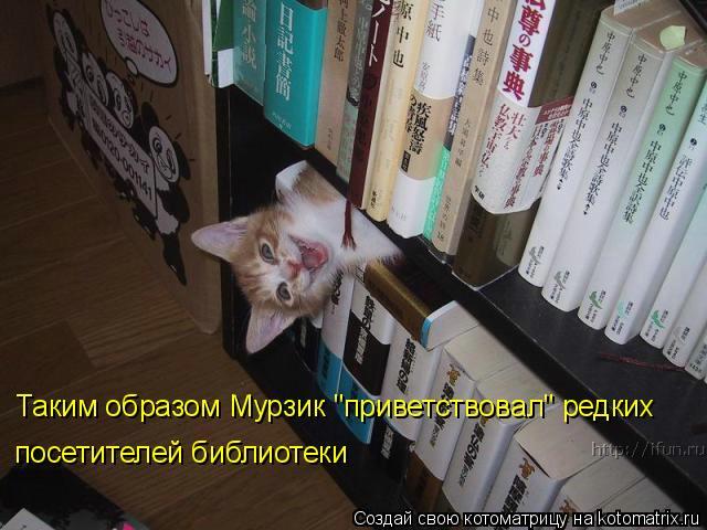"""Котоматрица - Таким образом Мурзик """"приветствовал"""" редких посетителей библиотеки"""
