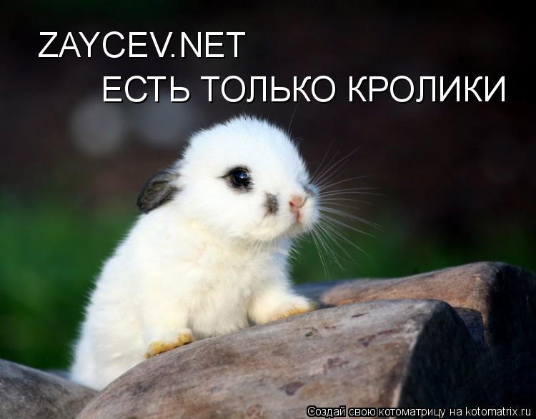 Котоматрица: ZAYCEV.NET ЕСТЬ ТОЛЬКО КРОЛИКИ