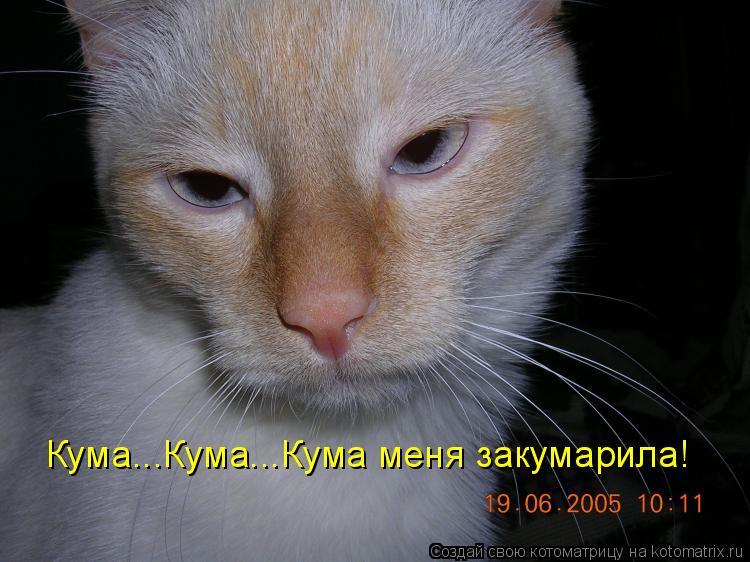 Котоматрица: Кума...Кума...Кума меня закумарила!