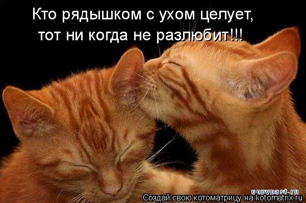 Котоматрица: Кто рядышком с ухом целует, тот ни когда не разлюбит!!!