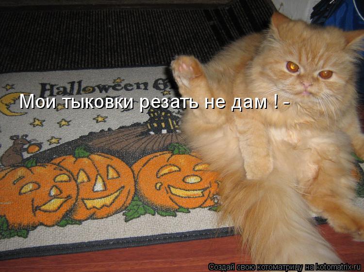 Котоматрица: Мои тыковки резать не дам ! -