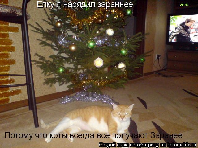 Котоматрица: Елку я нарядил зараннее Потому что коты всегда всё получают Заранее