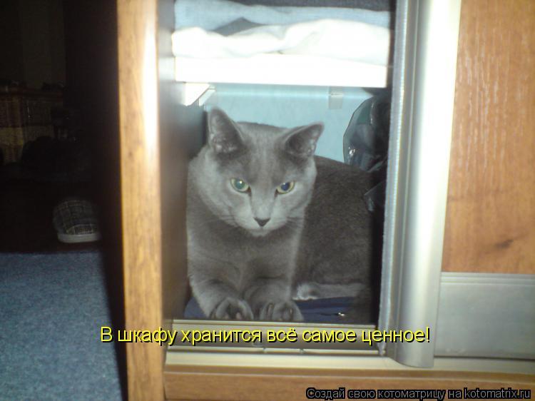 Котоматрица: В шкафу хранится всё самое ценное!