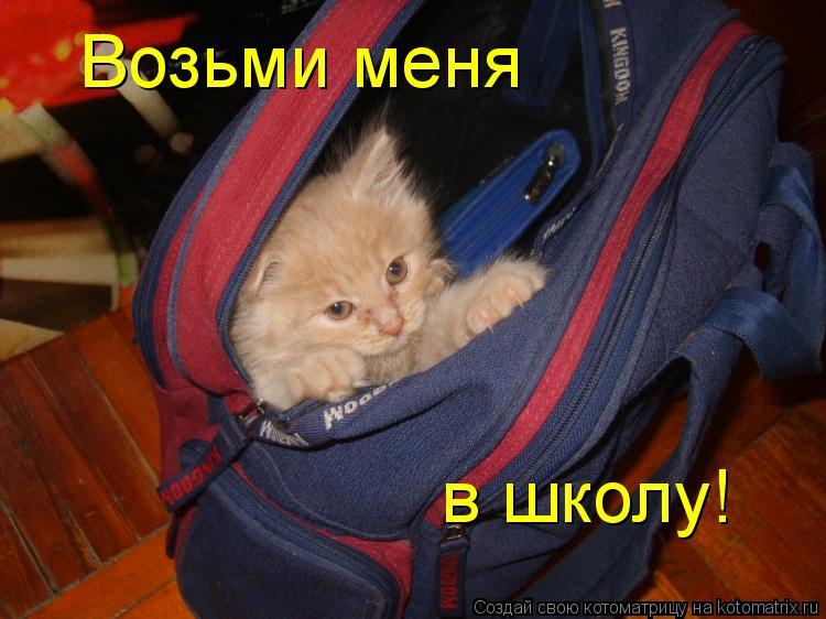 Котоматрица: Возьми меня в школу!