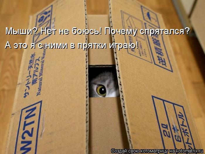 Котоматрица - Мыши? Нет не боюсь! Почему спрятался? А это я с ними в прятки играю!