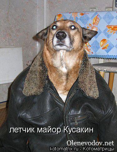 Котоматрица: летчик майор Кусакин