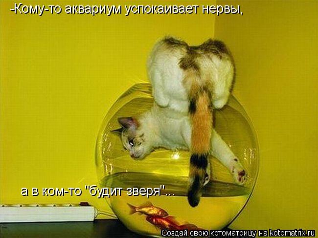 """Котоматрица: -Кому-то аквариум успокаивает нервы, а в ком-то """"будит зверя""""..."""