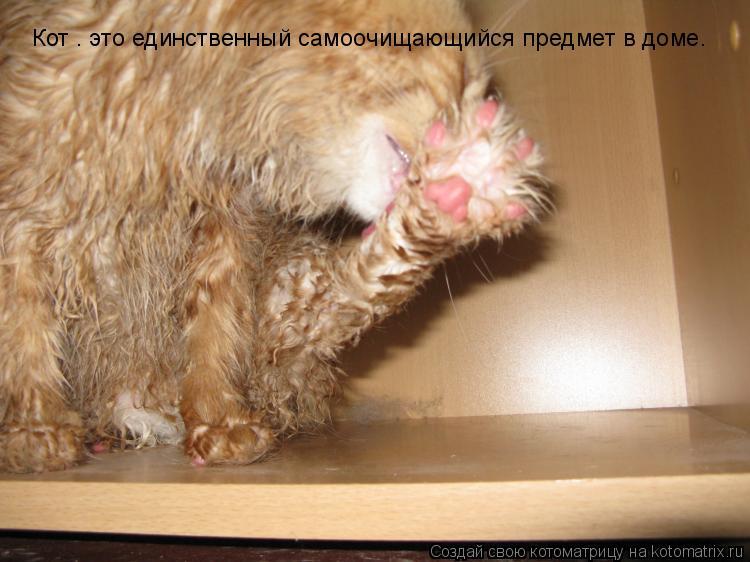Котоматрица: Кот – это единственный самоочищающийся предмет в доме.