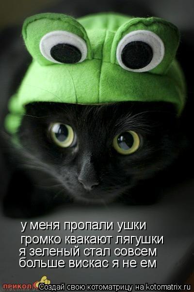 Котоматрица: у меня пропали ушки громко квакают лягушки я зеленый стал совсем больше вискас я не ем