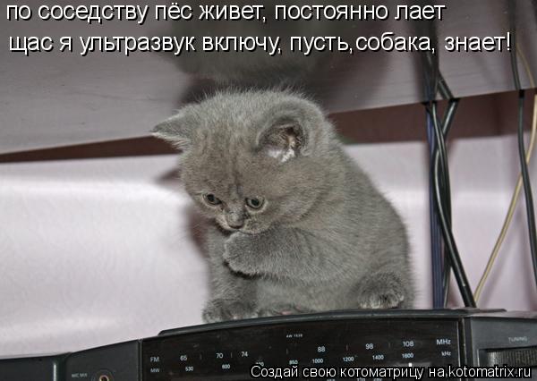 Котоматрица: по соседству пёс живет, постоянно лает щас я ультразвук включу, пусть,собака, знает!