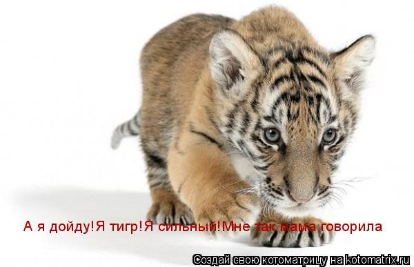 Котоматрица: А я дойду!Я тигр!Я сильный! А я дойду!Я тигр!Я сильный!Мне так мама говорила А я дойду!Я тигр!Я сильный!Мне так мама говорила