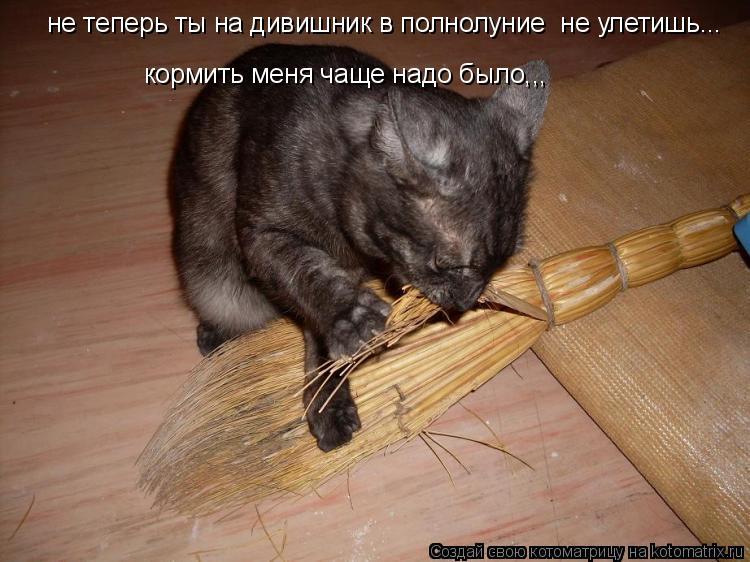 Котоматрица: не теперь ты на дивишник в полнолуние  не улетишь... кормить меня чаще надо было,,,