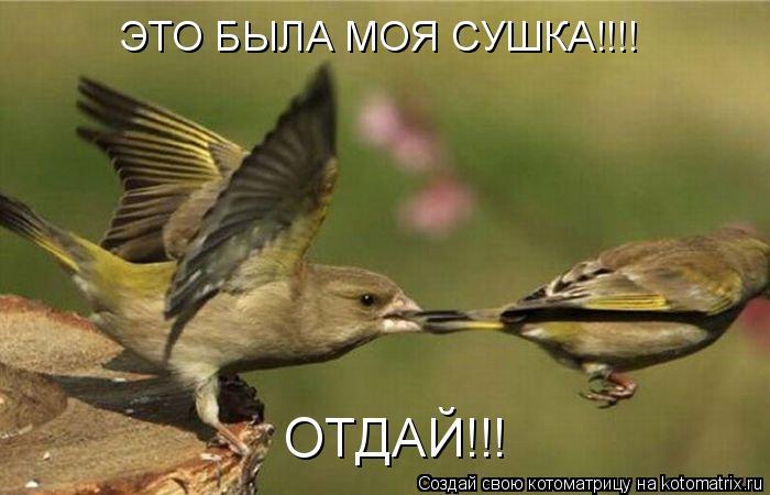 Котоматрица: ЭТО БЫЛА МОЯ СУШКА!!!! ОТДАЙ!!!