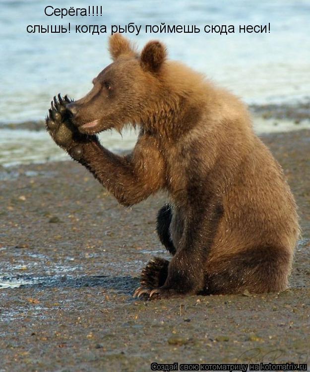 Котоматрица: Серёга!!!! слышь! когда рыбу поймешь сюда неси!