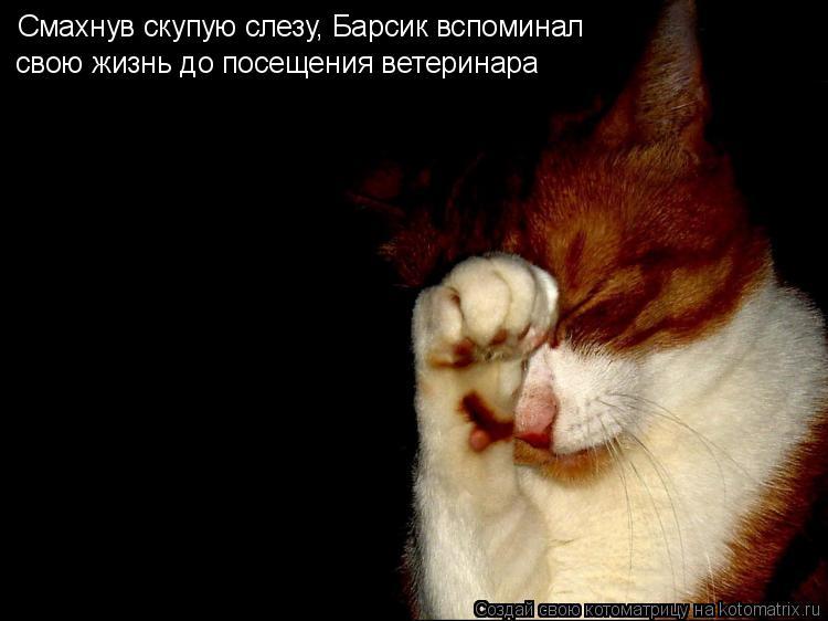 Котоматрица: Смахнув скупую слезу, Барсик вспоминал свою жизнь до посещения ветеринара
