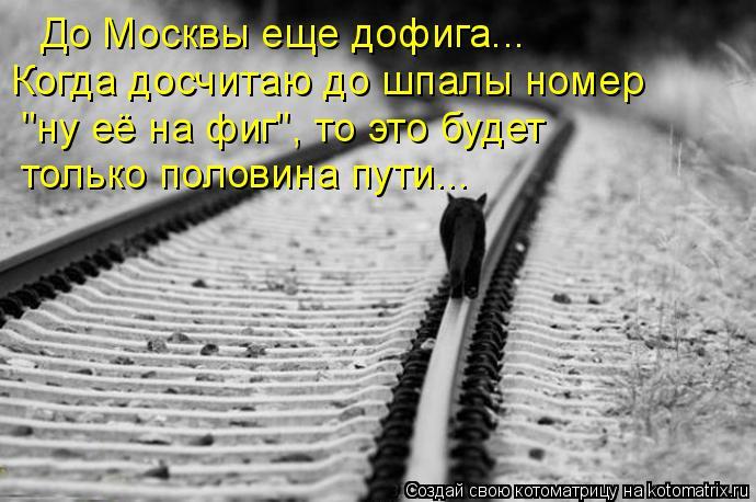 """Котоматрица: До Москвы еще дофига... Когда досчитаю до шпалы номер """"ну её на фиг"""", то это будет  только половина пути..."""