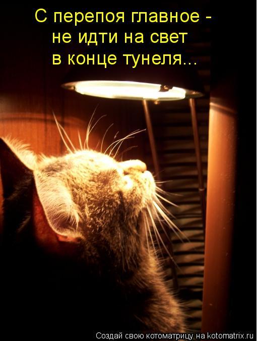 Котоматрица: С перепоя главное - не идти на свет в конце тунеля...