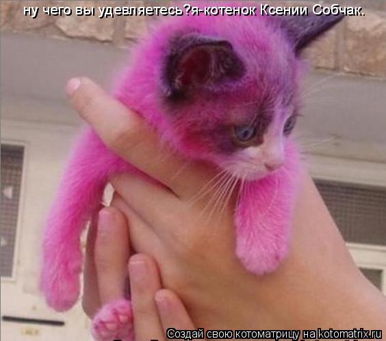 Котоматрица: ну чего вы удевляетесь?я-котенок Ксении Собчак. ну чего вы удевляетесь?я-котенок Ксении Собчак.