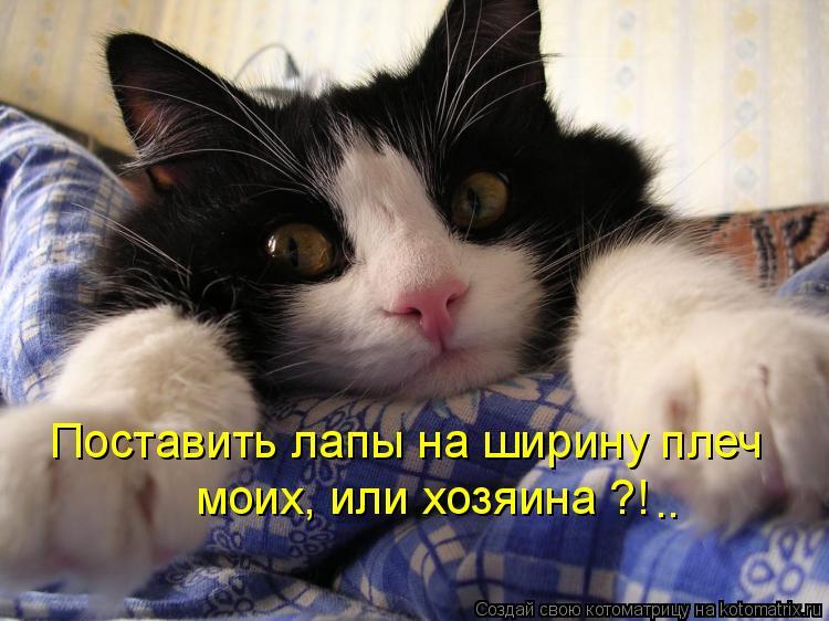 Котоматрица: Поставить лапы на ширину плеч моих, или хозяина ?! ..