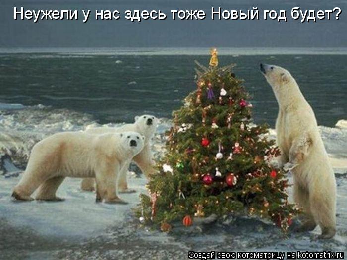 Котоматрица: Неужели у нас здесь тоже Новый год будет?