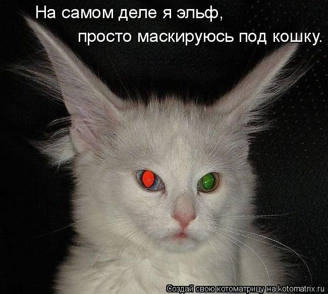 Котоматрица: На самом деле я эльф,  просто маскируюсь под кошку.