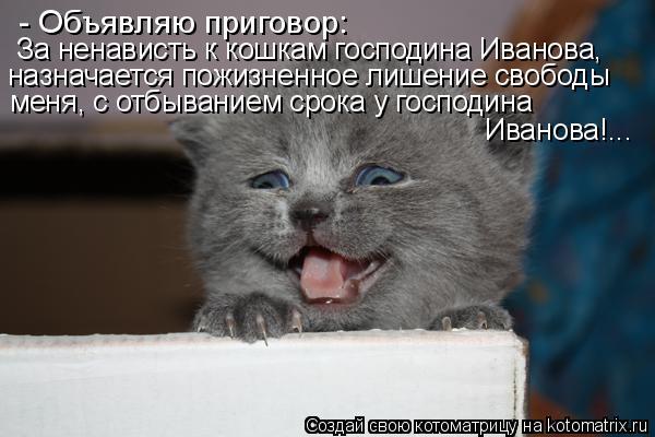 Котоматрица: - Объявляю приговор: За ненависть к кошкам господина Иванова, назначается пожизненное лишение свободы меня, с отбыванием срока у господина