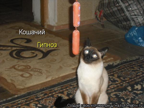Котоматрица: Кошачий  Гипноз