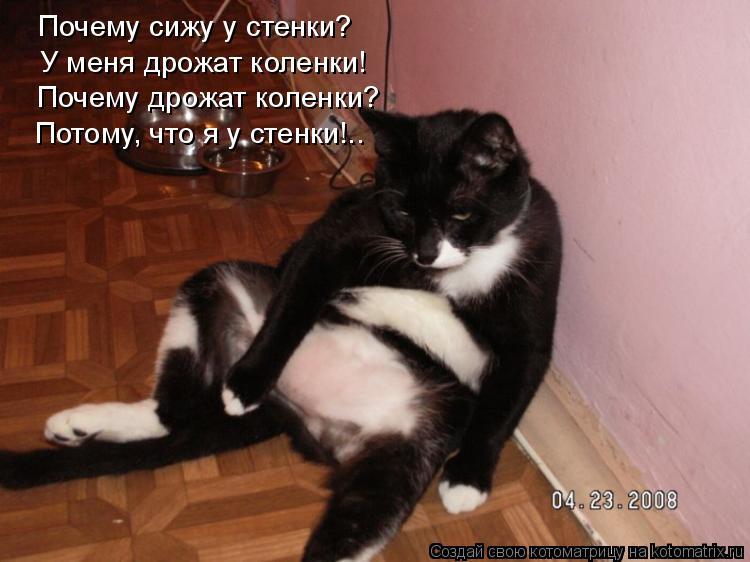Котоматрица: Почему сижу у стенки? У меня дрожат коленки! Почему дрожат коленки? Потому, что я у стенки!..