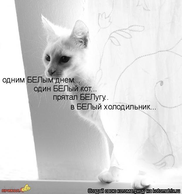 Котоматрица: в БЕЛый холодильник... одним БЕЛым днем... один БЕЛый кот... прятал БЕЛугу..